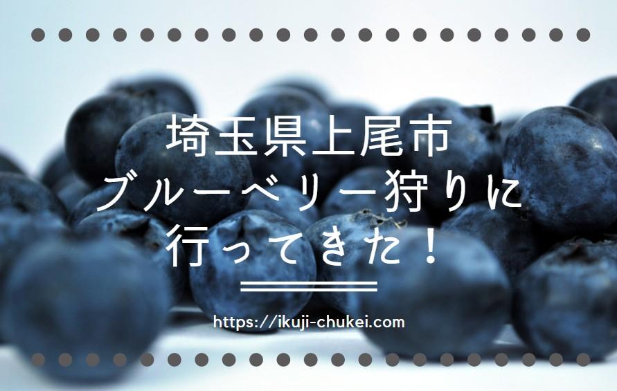 【関東】予約不要のブルーベリー狩り@埼玉県上尾市に2歳児と行ってきた口コミ!