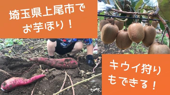 【関東】予約不要!埼玉県上尾市で「さつまいも掘り」「キウイ狩り」をした口コミ。楽しくて子供大喜び♪